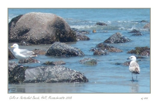Seagulls on Rocks on Nantasket Beach Hull MA photographs by Christine Jannino